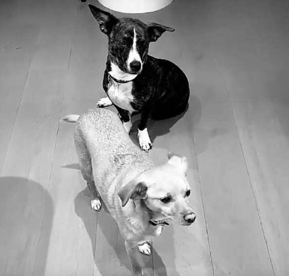 Ariana Grande Mac Miller Dog Myron Toulouse