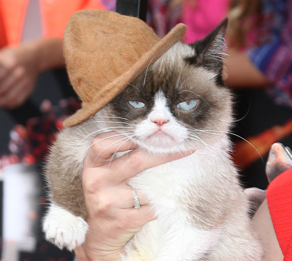 Grumpy Cat at the MTV Movie Awards