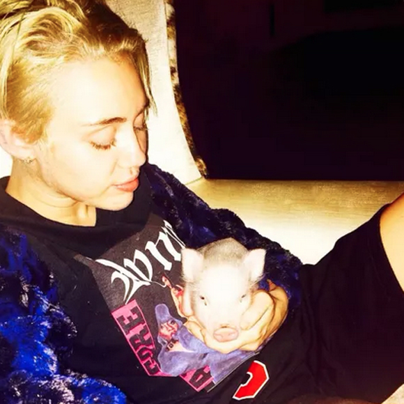 Miley Cyrus Suffers Another Heartbreaking Loss; Her Pet Pig Has Died