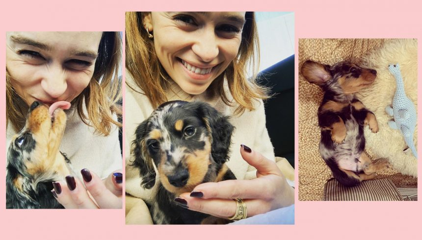 Emilia Clarke Just Got The Most ADORABLE Puppy Of All Time!