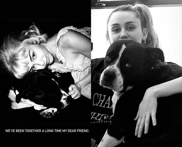 Miley Cyrus dog mary jane death